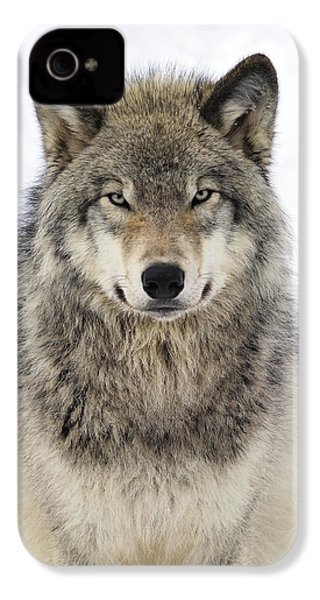 Timber Wolf Portrait IPhone 4 Case