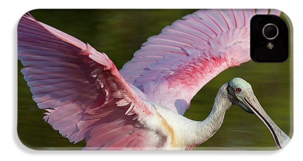 Usa, Florida, Everglades National Park IPhone 4 Case by Jaynes Gallery