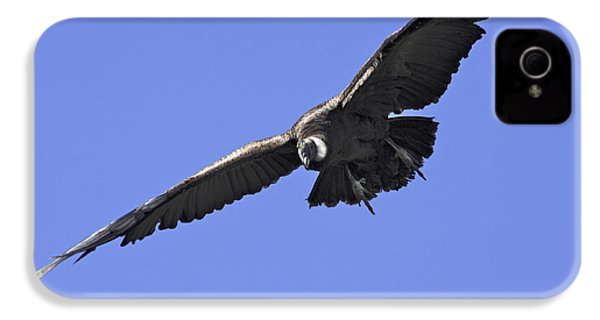 Andean Condor IPhone 4 Case