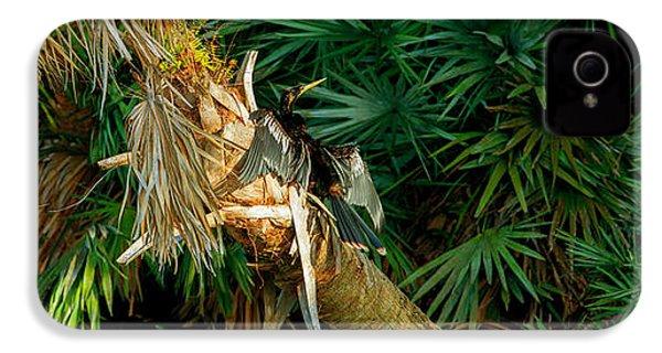 Anhinga Anhinga Anhinga On A Tree IPhone 4 Case by Panoramic Images