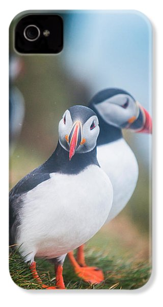 Atlantic Puffins Fratercula Arctica IPhone 4 Case