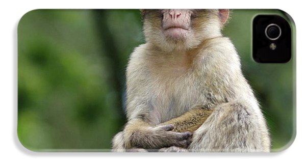 Barbary Macaque IPhone 4 Case by Nigel Downer