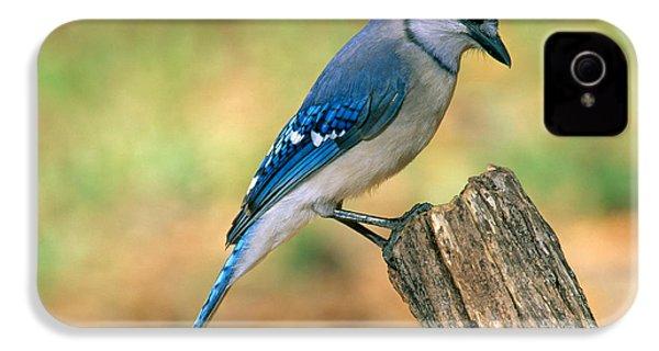 Blue Jay IPhone 4 / 4s Case by Millard H. Sharp