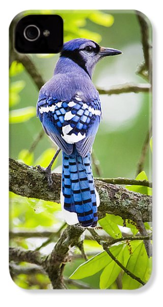 Bluejay IPhone 4 Case
