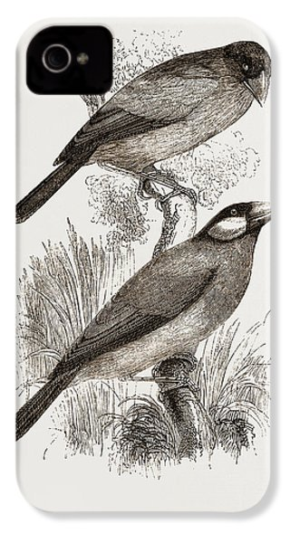 Crossbills IPhone 4 Case by Litz Collection