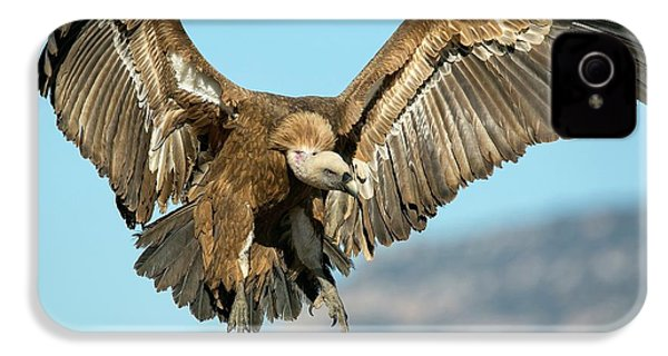 Griffon Vulture Flying IPhone 4 Case by Nicolas Reusens