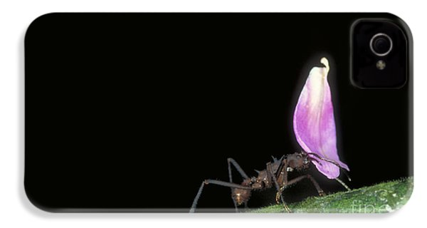 Leafcutter Ant IPhone 4 Case by Gregory G. Dimijian