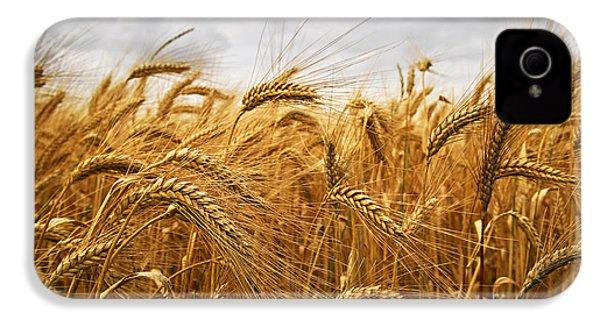 Wheat IPhone 4 / 4s Case by Elena Elisseeva