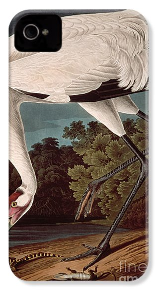 Whooping Crane IPhone 4 / 4s Case by John James Audubon