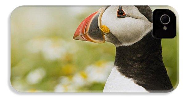 Atlantic Puffin In Breeding Plumage IPhone 4 Case by Sebastian Kennerknecht