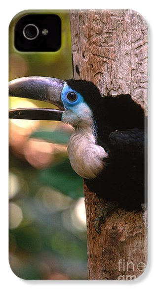 Yellow-ridged Toucan IPhone 4 Case by Art Wolfe