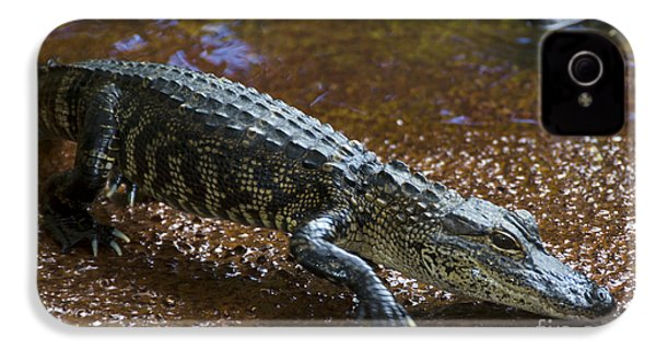American Alligator IPhone 4 Case by Mark Newman