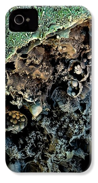 Broccoli IPhone 4 / 4s Case by Stefan Diller