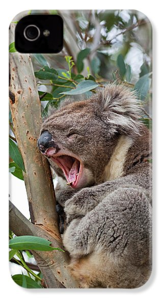 Koala (phascolarctos Cinereus IPhone 4 / 4s Case by Martin Zwick