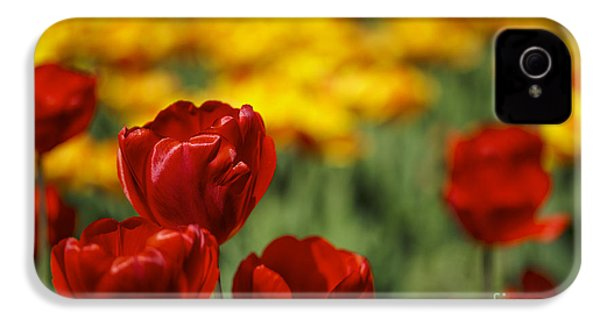 Red And Yellow Tulips IPhone 4 Case by Nailia Schwarz