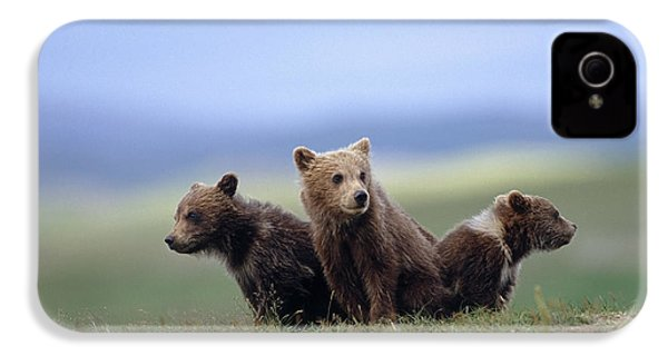 4 Young Brown Bear Cubs Huddled IPhone 4 Case by Eberhard Brunner