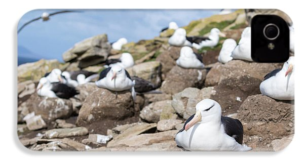 Black-browed Albatross (thalassarche IPhone 4 / 4s Case by Martin Zwick