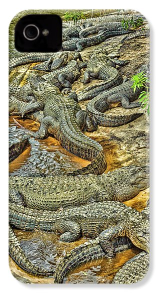 A Congregation Of Alligators IPhone 4 Case by Rona Schwarz
