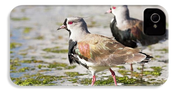 A Flock Of Southern Lapwings IPhone 4 Case by Ashley Cooper