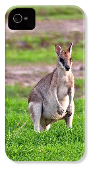A Male Grey Kangaroos (macropus IPhone 4 / 4s Case by Miva Stock