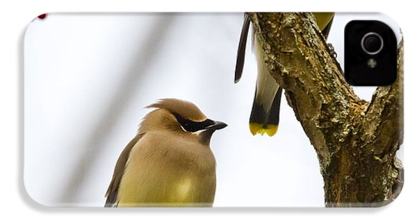 A Pair Of Cedar Waxwings IPhone 4 Case by Ricky L Jones