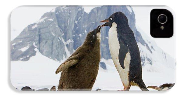 Adelie Penguin Chick Begging For Food IPhone 4 Case
