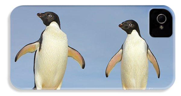 Adelie Penguin Duo IPhone 4 / 4s Case by Yva Momatiuk John Eastcott
