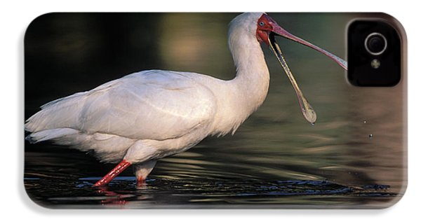 African Spoonbill IPhone 4 Case by Nigel Dennis