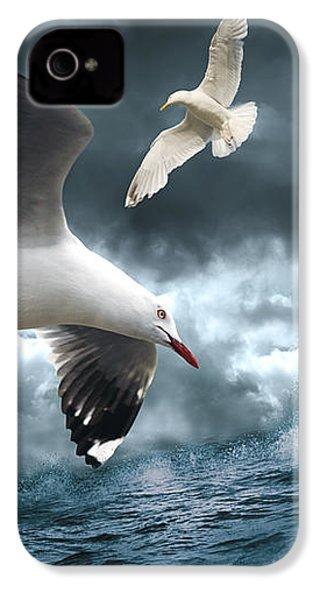 Albatross IPhone 4 Case by Linda Lees