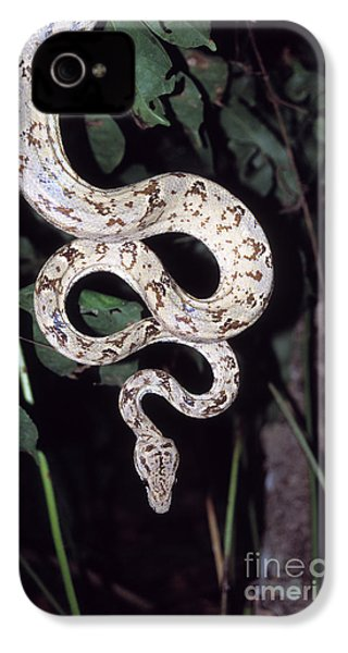 Amazon Tree Boa IPhone 4 / 4s Case by James Brunker