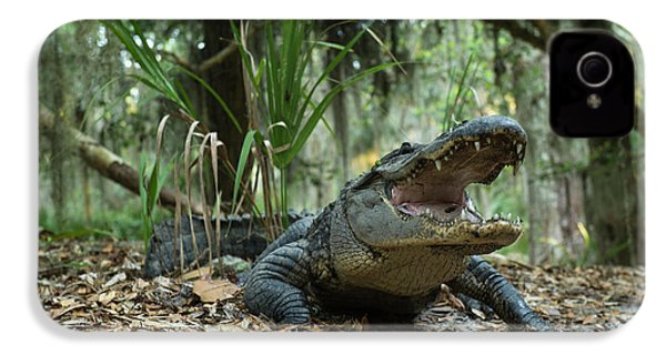 American Alligator (alligator IPhone 4 Case by Pete Oxford