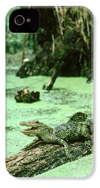 American Alligator IPhone 4 Case by Gregory G. Dimijian, M.D.