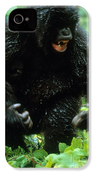Angry Mountain Gorilla IPhone 4 / 4s Case by Art Wolfe