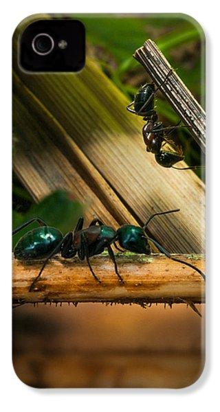Ants Adventure 2 IPhone 4 Case by Bob Orsillo