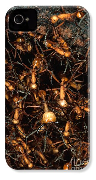Army Ant Bivouac Site IPhone 4 Case by Gregory G. Dimijian, M.D.