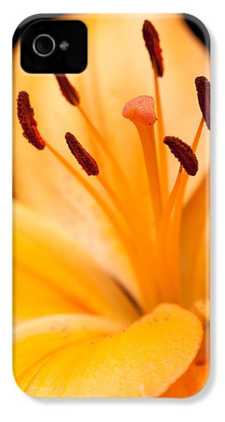 Asian Lily IPhone 4 / 4s Case by Sebastian Musial