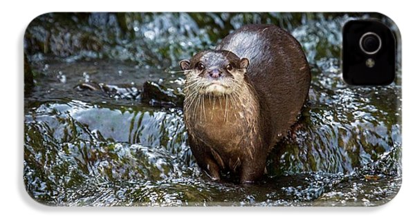 Asian Small-clawed Otter IPhone 4 Case by Paul Williams