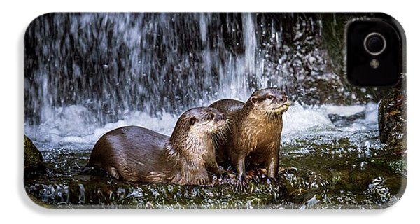 Asian Small-clawed Otters IPhone 4 Case by Paul Williams