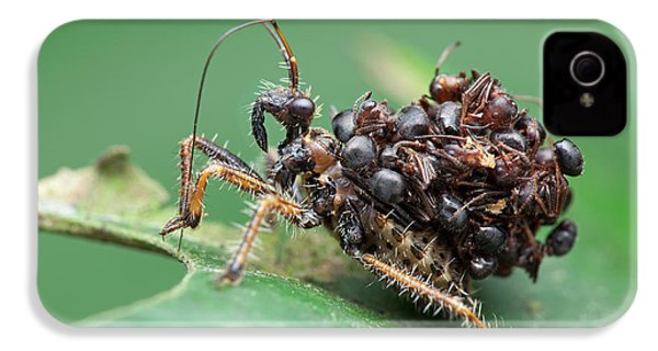 Assassin Bug Nymph With Ants IPhone 4 Case by Melvyn Yeo