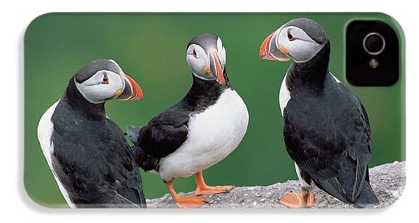 Atlantic Puffin Breeding Colony Canada IPhone 4 / 4s Case by
