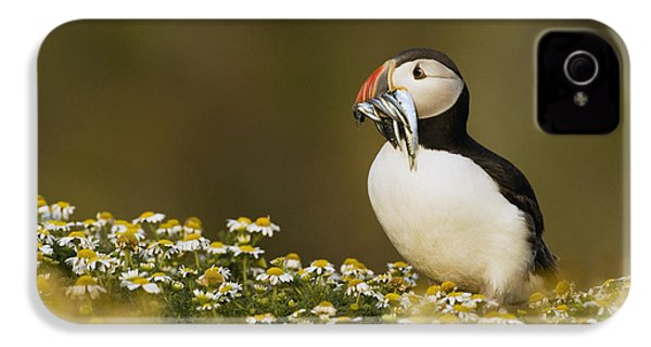 Atlantic Puffin Carrying Fish Skomer IPhone 4 / 4s Case by Sebastian Kennerknecht