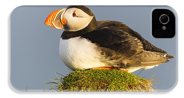 Atlantic Puffin Iceland IPhone 4 / 4s Case by Peer von Wahl