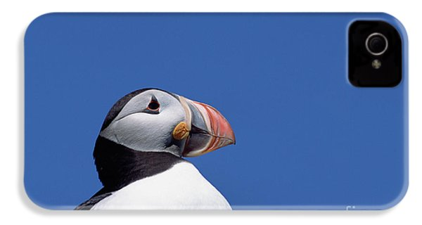 Atlantic Puffin In Breeding Colors IPhone 4 Case by Yva Momatiuk and John Eastcott