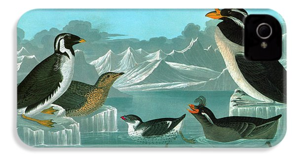 Audubon Auks IPhone 4 Case
