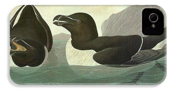 Audubon Razorbill IPhone 4 / 4s Case by Granger