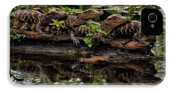 Baby Alligators Reflection IPhone 4 Case by Dan Sproul