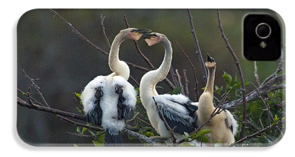 Baby Anhinga IPhone 4 / 4s Case by Mark Newman