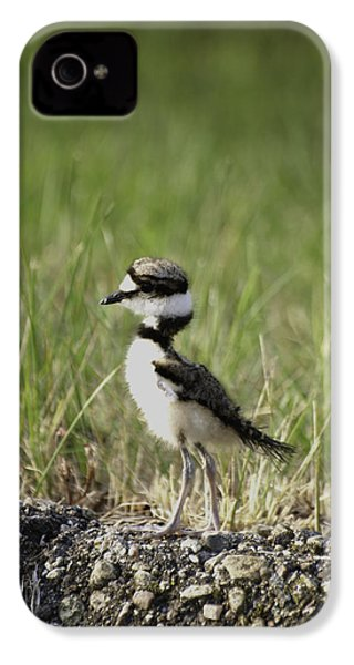 Baby Killdeer 2 IPhone 4 / 4s Case by Thomas Young