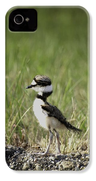 Baby Killdeer 2 IPhone 4 Case by Thomas Young