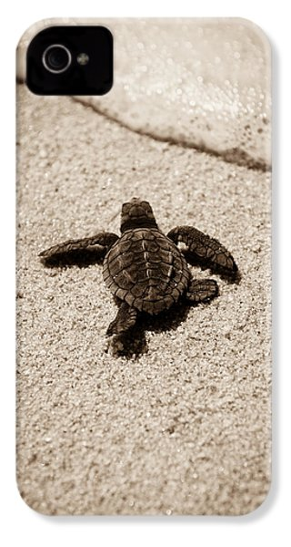 Baby Sea Turtle IPhone 4 Case by Sebastian Musial